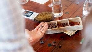 Kakaosorten beim Test.