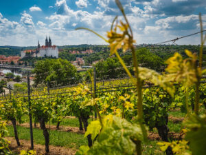 Weinstrasse Sachsen