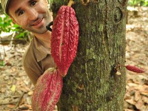 Herr Schaffer und die Kakaofrucht